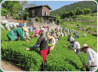 天空の茶畑