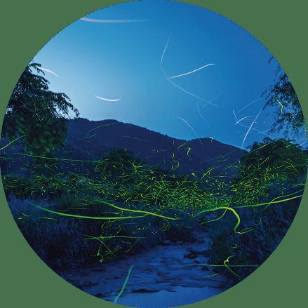 Hotaru (fireflies)